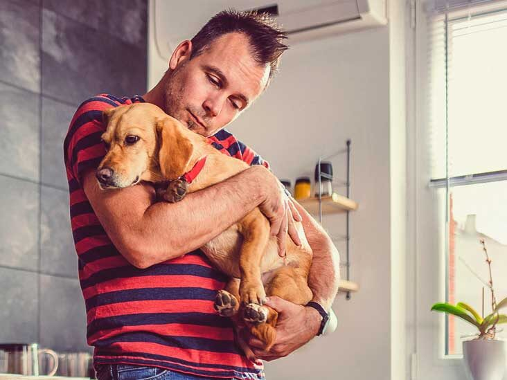 Planning To Register Your Pet As An Emotional Support Animal? This Is All You Must Know!!